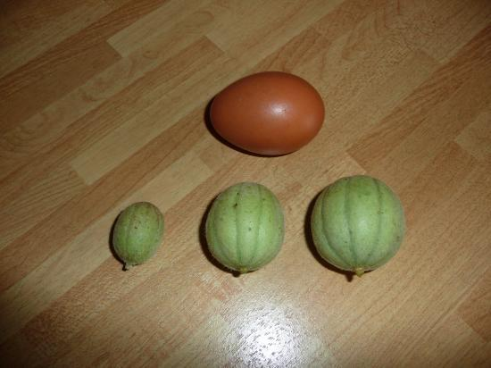 Mini melon